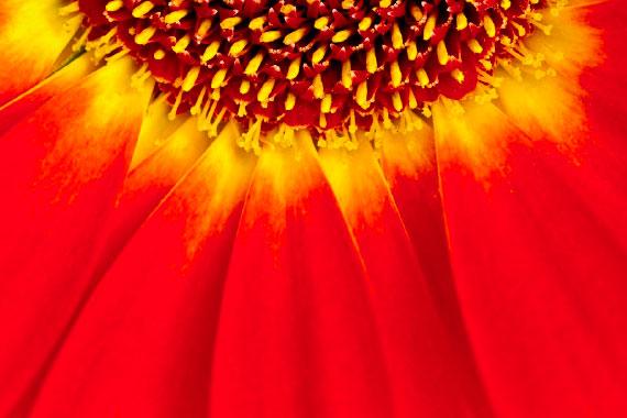 Vendita quadri online quadri moderni su tela - foto artistiche fine art fiori